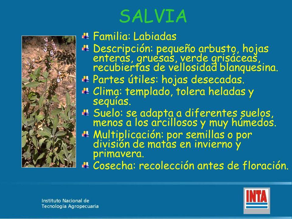 SALVIA Familia: Labiadas Descripción: pequeño arbusto, hojas enteras, gruesas, verde grisáceas, recubiertas de vellosidad blanquesina. Partes útiles: