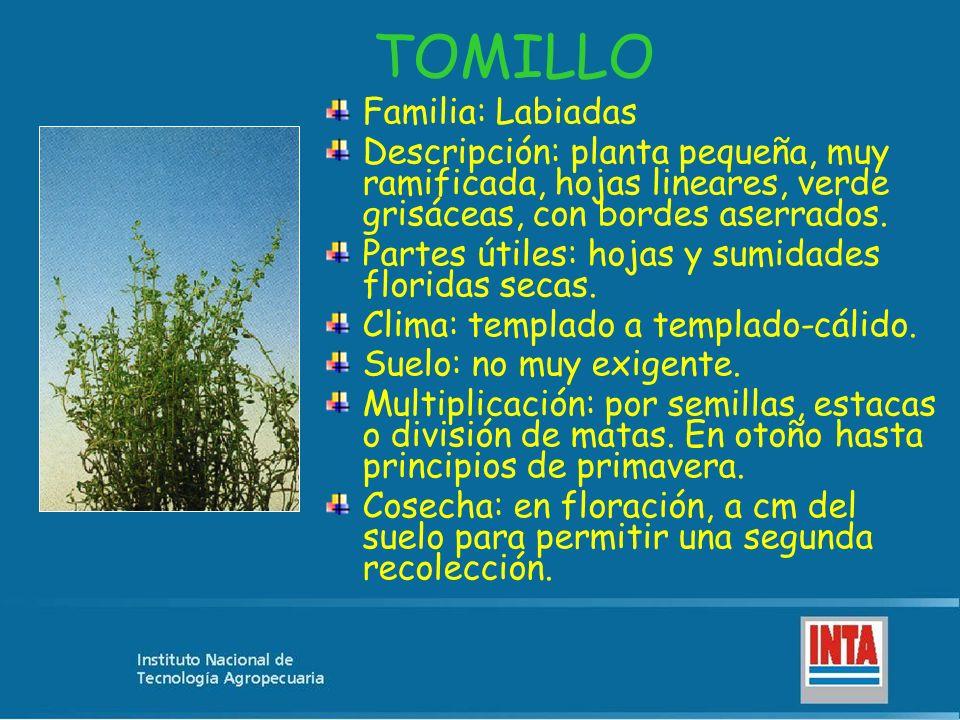 TOMILLO Familia: Labiadas Descripción: planta pequeña, muy ramificada, hojas lineares, verde grisáceas, con bordes aserrados. Partes útiles: hojas y s