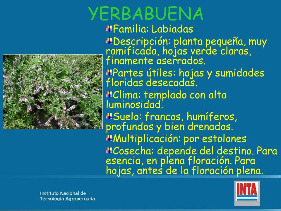 YERBABUENA Familia: Labiadas Descripción: planta pequeña, muy ramificada, hojas verde claras, finamente aserrados. Partes útiles: hojas y sumidades fl