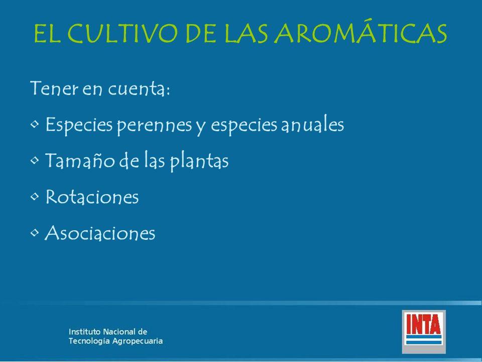 EL CULTIVO DE LAS AROMÁTICAS Tener en cuenta: Especies perennes y especies anuales Tamaño de las plantas Rotaciones Asociaciones
