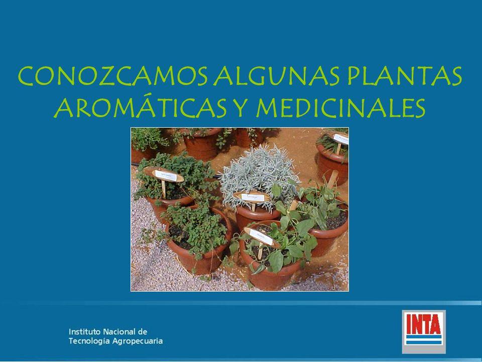 CONOZCAMOS ALGUNAS PLANTAS AROMÁTICAS Y MEDICINALES