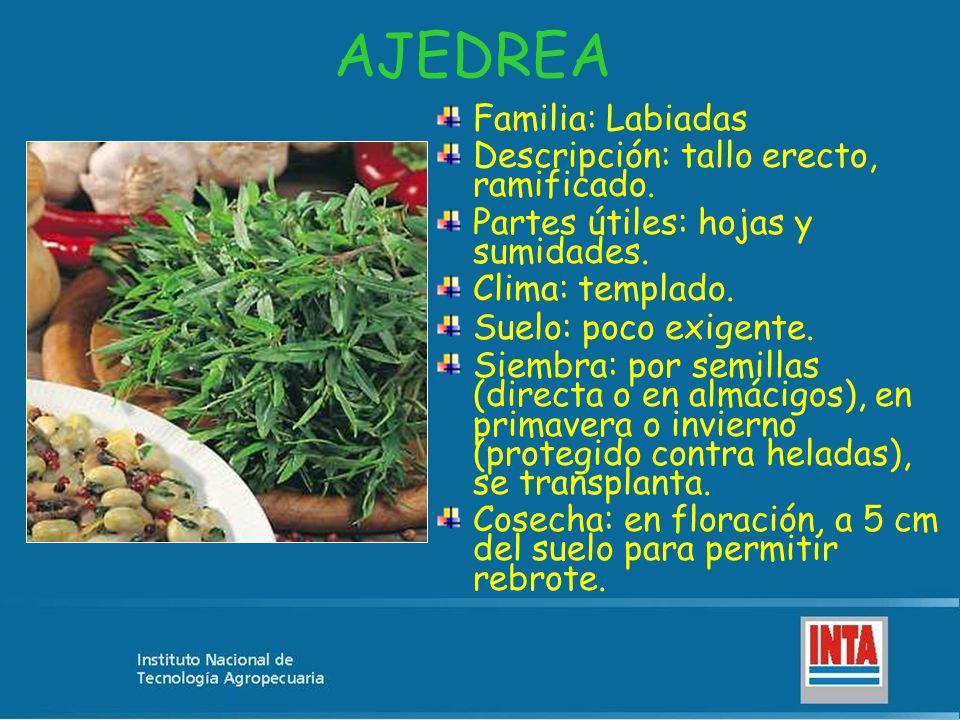 POLEO Familia: Verbenáceas Descripción: arbusto, muy ramificado, hojas lanceoladas, finamente aserradas.