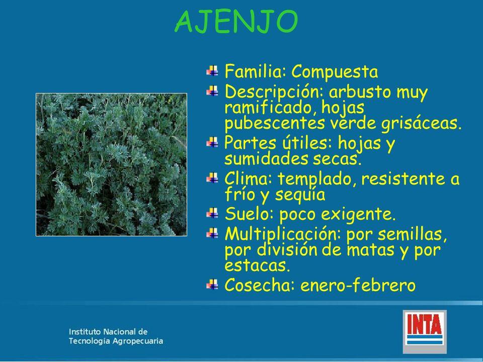 AJENJO Familia: Compuesta Descripción: arbusto muy ramificado, hojas pubescentes verde grisáceas. Partes útiles: hojas y sumidades secas. Clima: templ