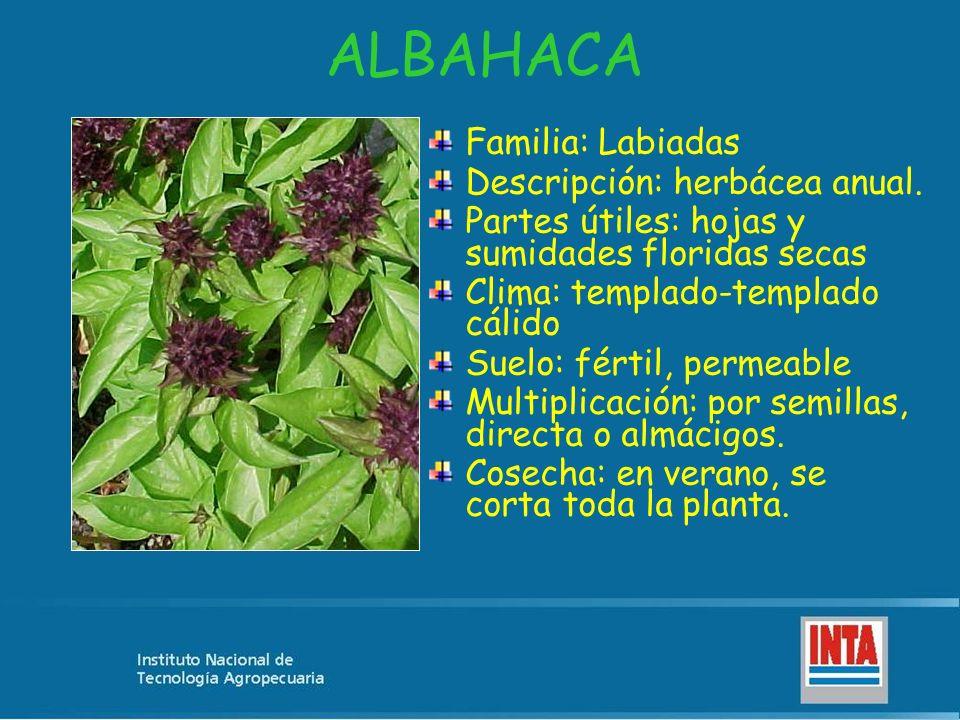 ALBAHACA Familia: Labiadas Descripción: herbácea anual. Partes útiles: hojas y sumidades floridas secas Clima: templado-templado cálido Suelo: fértil,