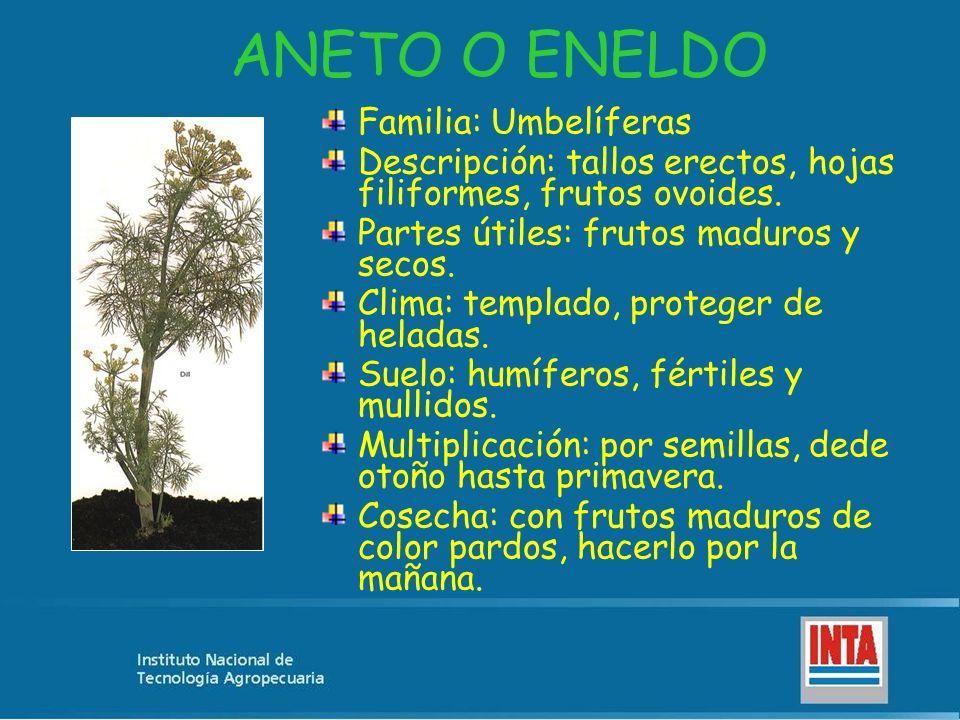 ANIS Familia: Umbelíferas.Descripción: herbácea Partes útiles: frutos maduros y secos.
