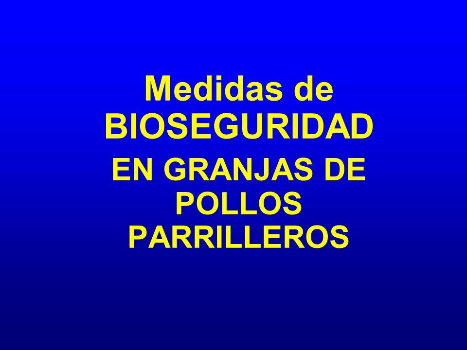 Medidas de BIOSEGURIDAD EN GRANJAS DE POLLOS PARRILLEROS