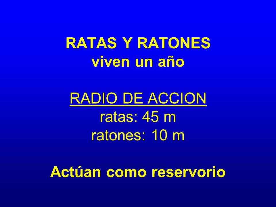 RATAS Y RATONES viven un año RADIO DE ACCION ratas: 45 m ratones: 10 m Actúan como reservorio
