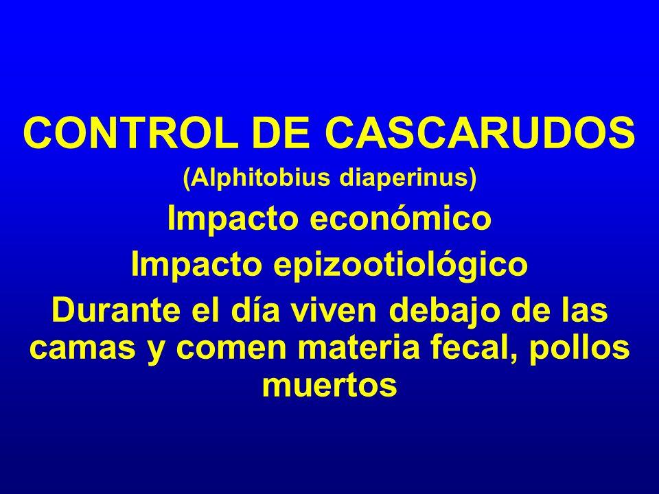 CONTROL DE CASCARUDOS (Alphitobius diaperinus) Impacto económico Impacto epizootiológico Durante el día viven debajo de las camas y comen materia feca