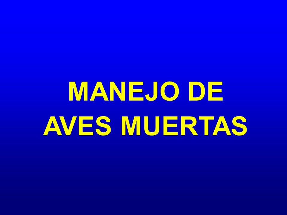 MANEJO DE AVES MUERTAS