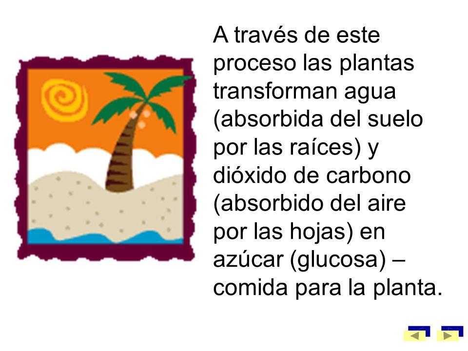 La fotosíntesis es el proceso por el cual las plantas convierten la energía luminosa del sol en energía química.