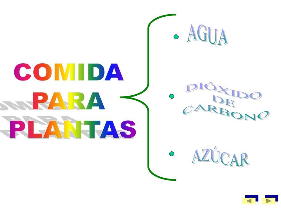 A través de este proceso las plantas transforman agua (absorbida del suelo por las raíces) y dióxido de carbono (absorbido del aire por las hojas) en