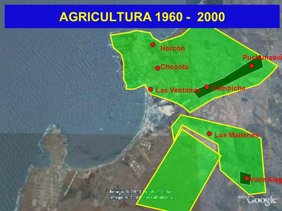 AGRICULTURA 1960 - 2000 Las Ventanas Chocota Horcón Puchuncaví Los Maitenes Valle Alegre Campiche