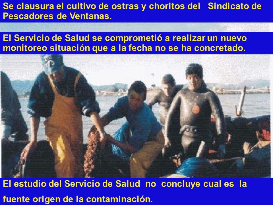 Se clausura el cultivo de ostras y choritos del Sindicato de Pescadores de Ventanas. El Servicio de Salud se comprometió a realizar un nuevo monitoreo