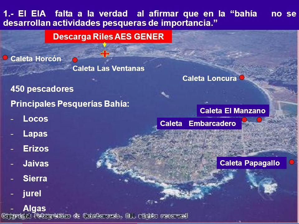 1.- El EIA falta a la verdad al afirmar que en la bahía no se desarrollan actividades pesqueras de importancia. Caleta Horcón Caleta Las Ventanas Cale