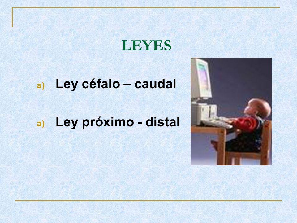LEYES a) Ley céfalo – caudal a) Ley próximo - distal
