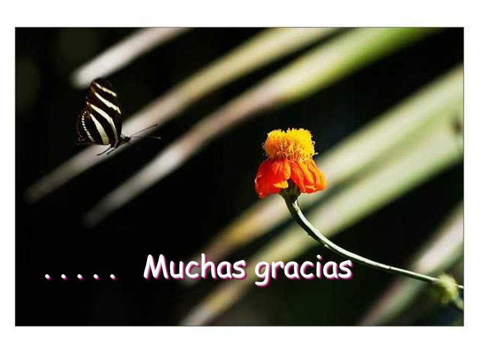 ..... Muchas gracias