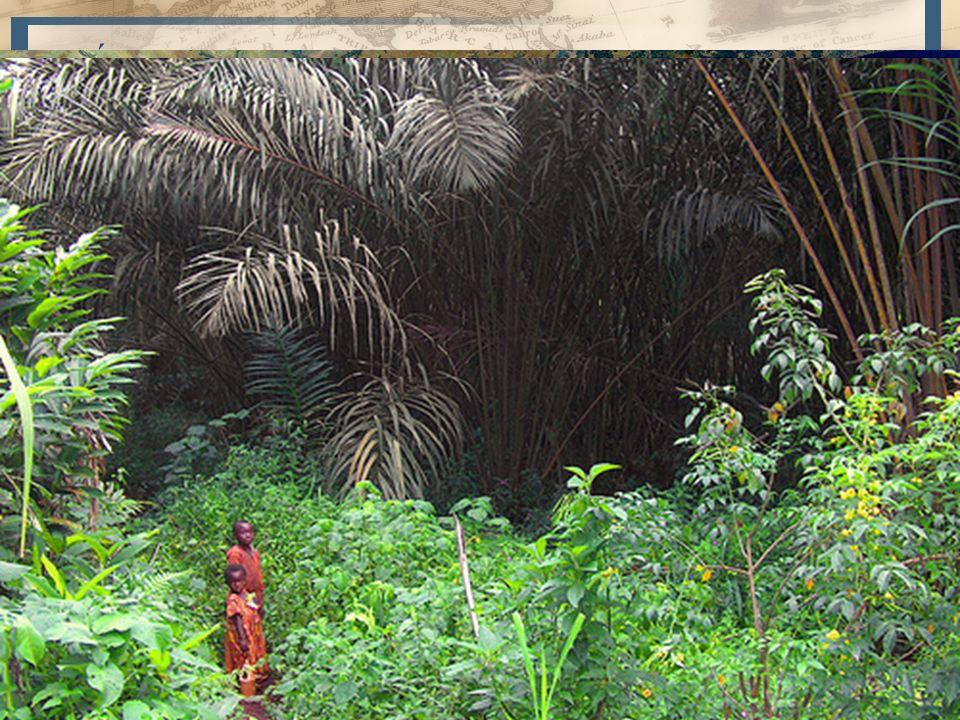 7 África Central (Valle del Congo) – Depresión o cubeta del Congo y sus afluentes – Dintel norafricano, Dintel surafricano, macizos montañosos de los