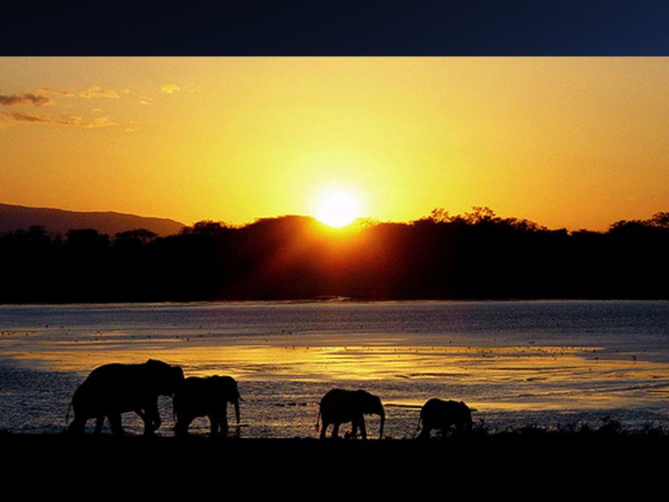8 África Oriental – Mar Rojo, Río Zambeze, O. Índico, Sudán y Valle del Congo – Altas tierras y lagos (más de 1000 mts) y fosas tectónicas – Kilimanja