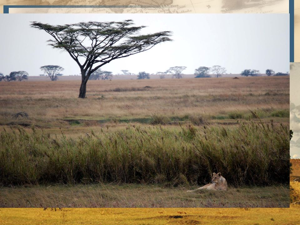 4 Sudán – Este a Oeste, limitado por el Sahara, O. Atlántico, y macizo de Abisinia – Nilo Blanco, lago Tchad, río Níger y río Senegal – Sabanas y este