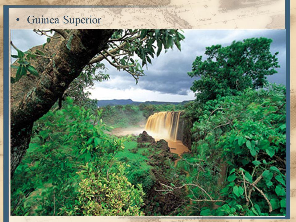 5 Guinea Superior – Ríos abundantes p/e Volta y curso bajo del Níger – Más lluvias y denso bosque tropical Guinea Inferior – Entre Golfo de Biafra y M