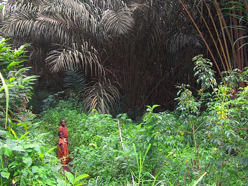6 África Central (Valle del Congo) – Depresión o cubeta del Congo y sus afluentes – Dintel norafricano, Dintel surafricano, macizos montañosos de los