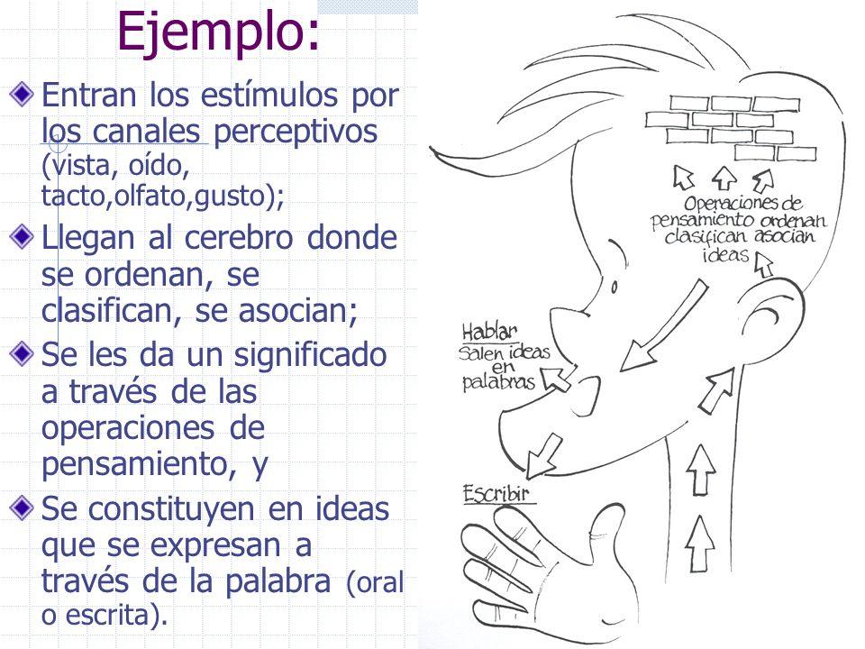 Ejemplo: Entran los estímulos por los canales perceptivos (vista, oído, tacto,olfato,gusto); Llegan al cerebro donde se ordenan, se clasifican, se asocian; Se les da un significado a través de las operaciones de pensamiento, y Se constituyen en ideas que se expresan a través de la palabra (oral o escrita).
