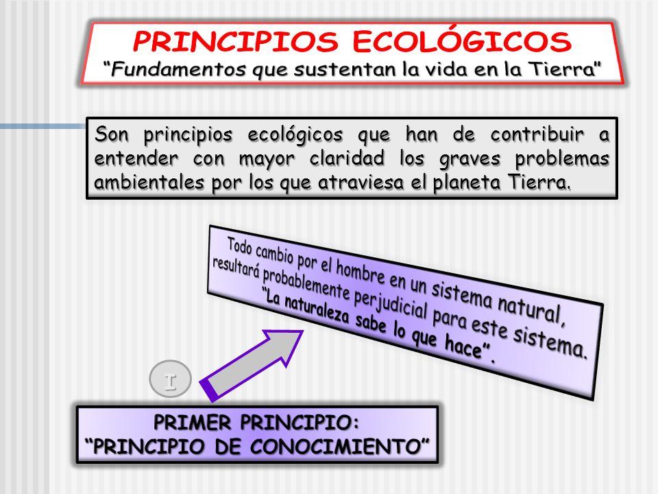 Son principios ecológicos que han de contribuir a entender con mayor claridad los graves problemas ambientales por los que atraviesa el planeta Tierra