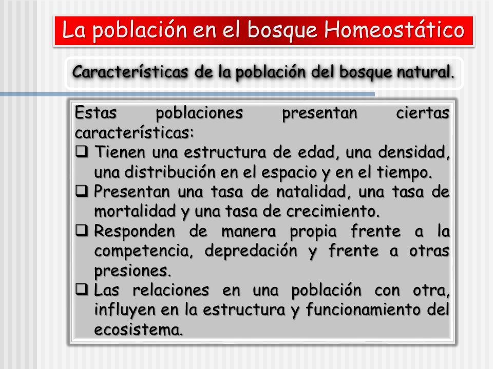 La población en el bosque Homeostático Características de la población del bosque natural. Estas poblaciones presentan ciertas características: Tienen