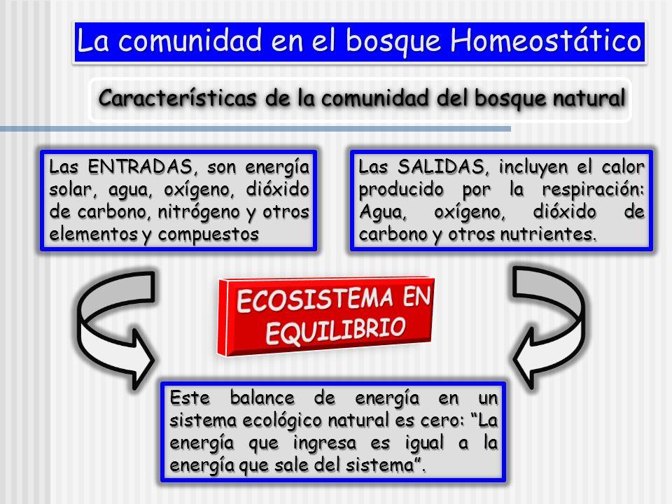 La comunidad en el bosque Homeostático Características de la comunidad del bosque natural Las ENTRADAS, son energía solar, agua, oxígeno, dióxido de c