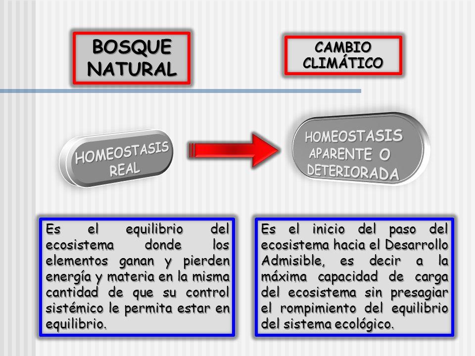 BOSQUE NATURAL CAMBIO CLIMÁTICO Es el equilibrio del ecosistema donde los elementos ganan y pierden energía y materia en la misma cantidad de que su c