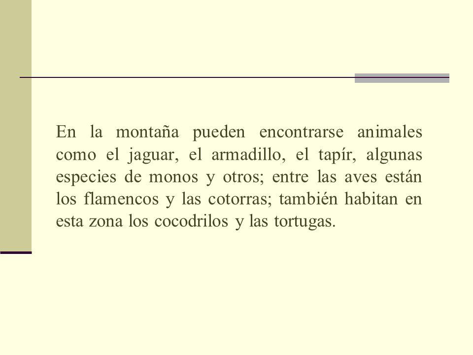 En la montaña pueden encontrarse animales como el jaguar, el armadillo, el tapír, algunas especies de monos y otros; entre las aves están los flamenco