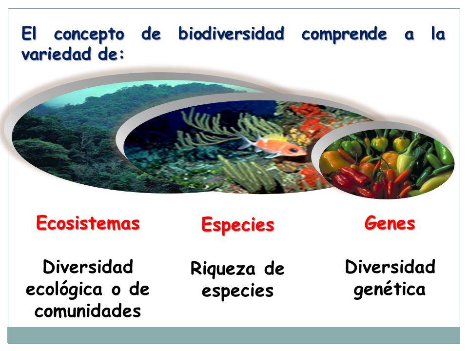 Genes Diversidad genética Especies Riqueza de especies Ecosistemas Diversidad ecológica o de comunidades El concepto de biodiversidad comprende a la v