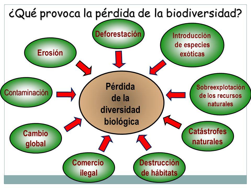 ¿Qué provoca la pérdida de la biodiversidad? Pérdida de la diversidad biológica Deforestación Erosión Contaminación Catástrofes naturales Cambio globa