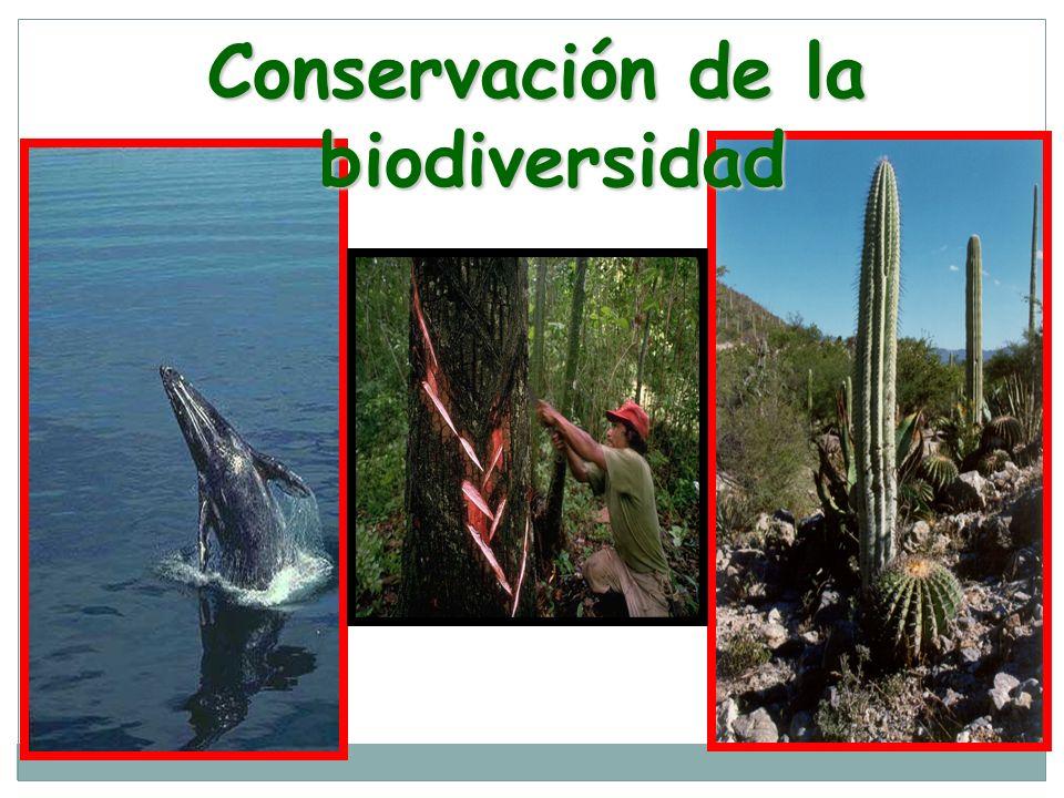 Conservación de la biodiversidad biodiversidad