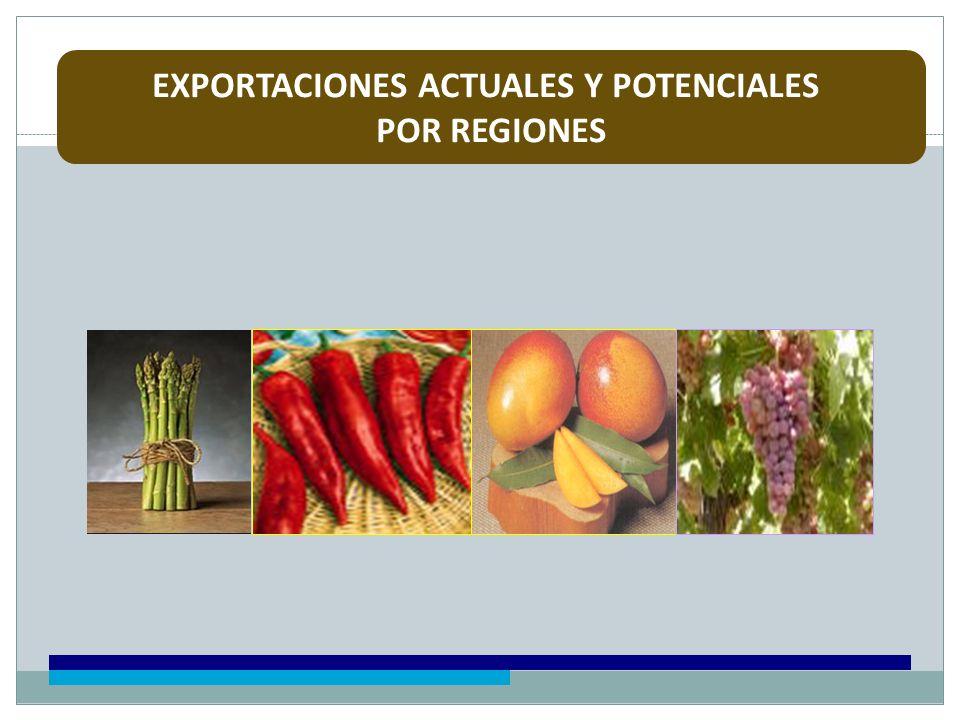 EXPORTACIONES ACTUALES Y POTENCIALES POR REGIONES
