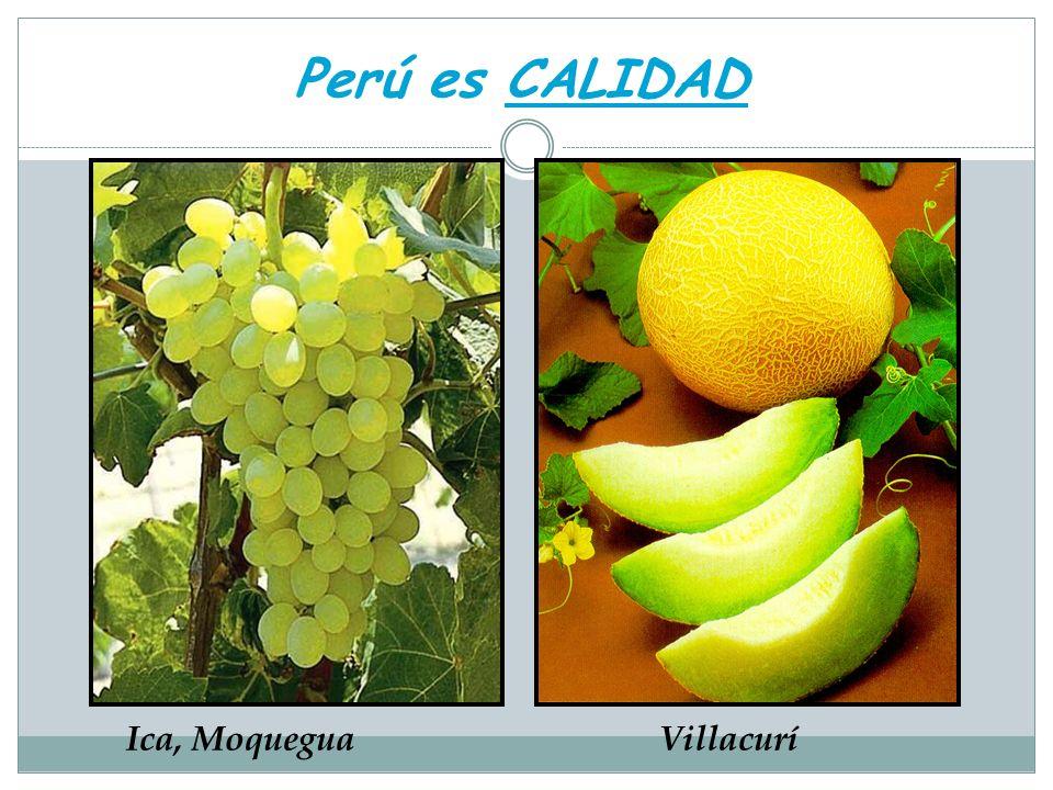 Perú es CALIDAD Ica, MoqueguaVillacurí