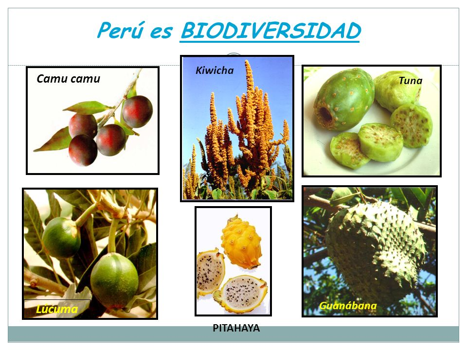 Perú es BIODIVERSIDAD Camu camu Kiwicha Guanábana Tuna Lúcuma PITAHAYA