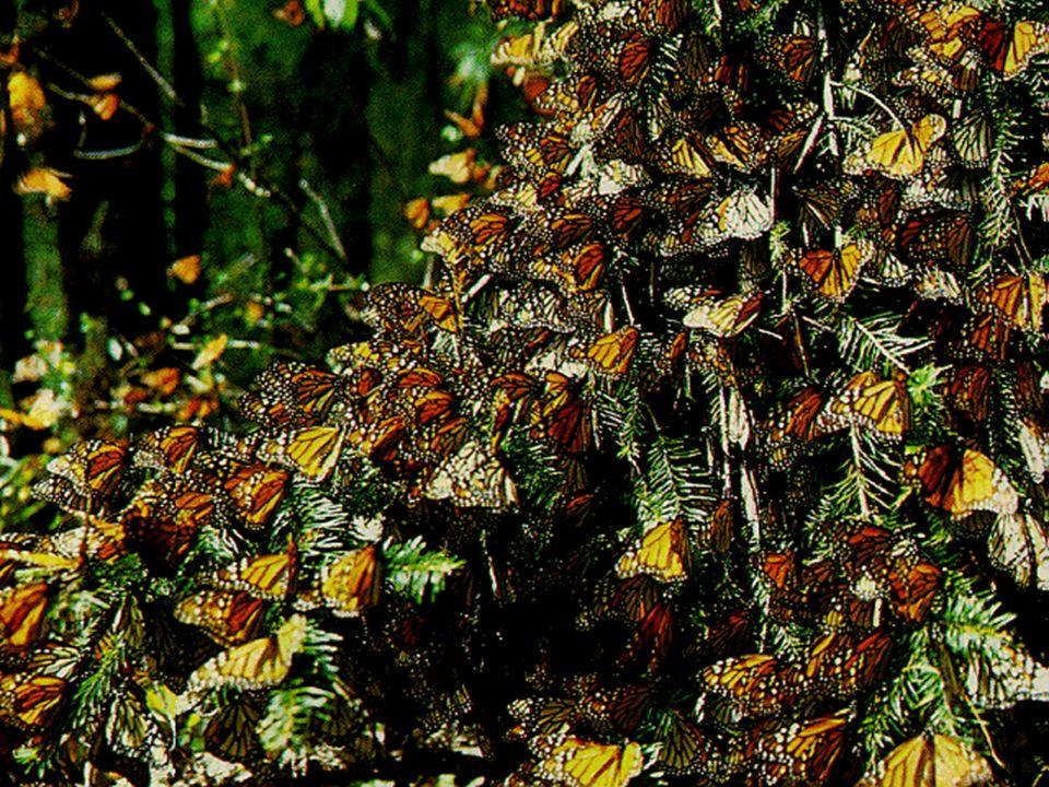 ¿Qué provoca la pérdida de la biodiversidad.