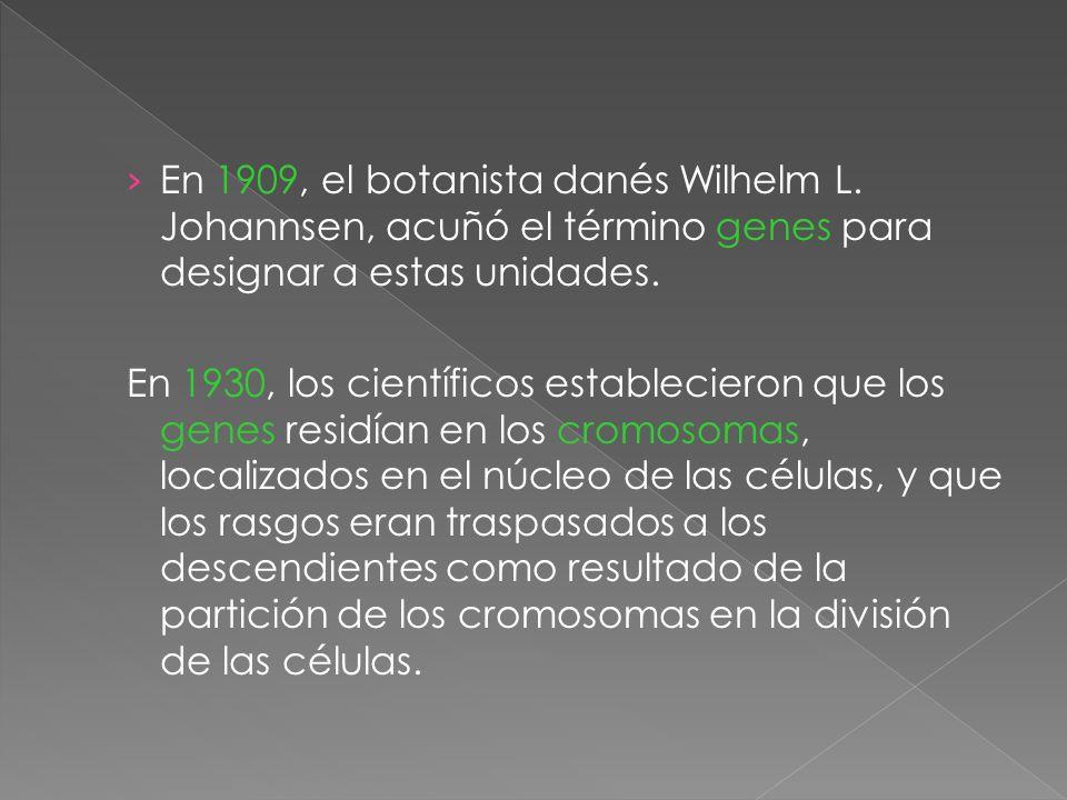 En 1909, el botanista danés Wilhelm L. Johannsen, acuñó el término genes para designar a estas unidades. En 1930, los científicos establecieron que lo