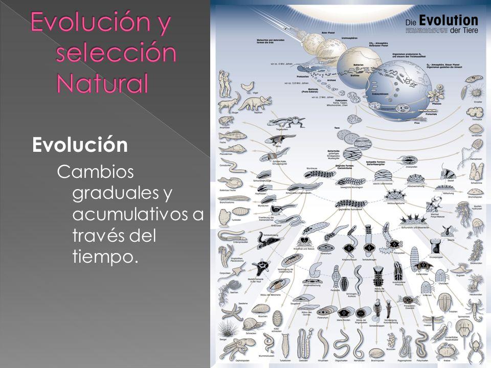 Evolución biológica Cambios graduales a través de mecanismos biológicos tales como la mutación y la selección natural.