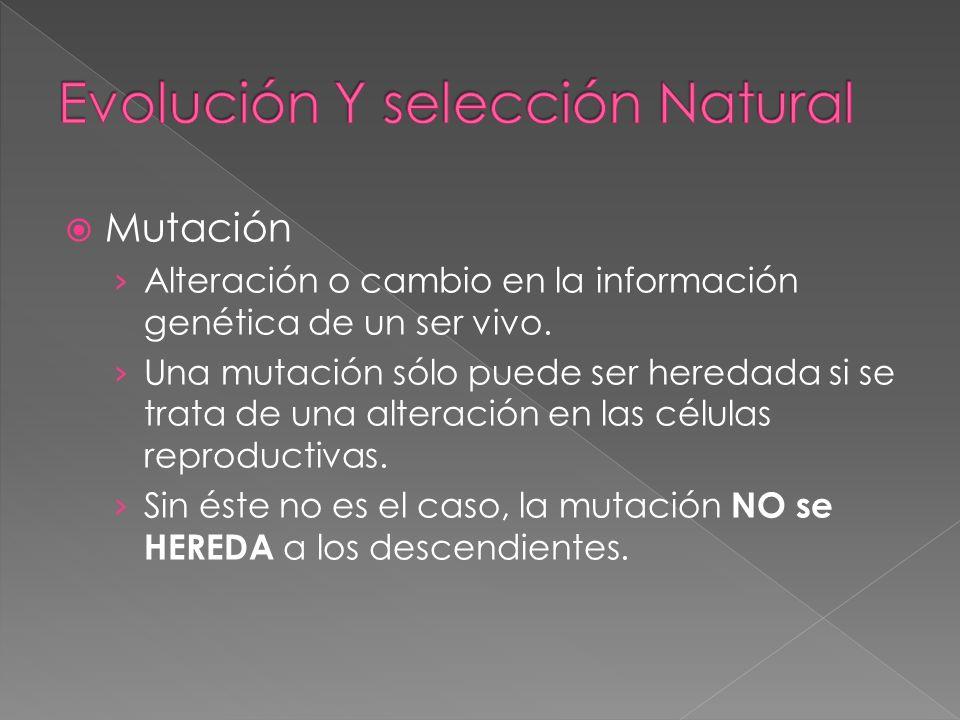Mutación Alteración o cambio en la información genética de un ser vivo. Una mutación sólo puede ser heredada si se trata de una alteración en las célu