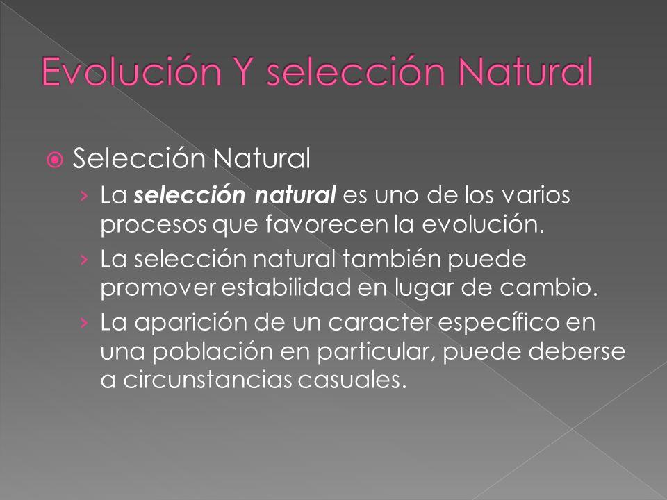 Selección Natural La selección natural es uno de los varios procesos que favorecen la evolución. La selección natural también puede promover estabilid