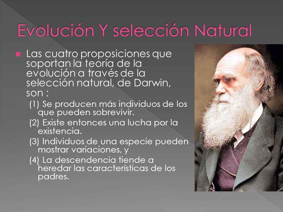 Las cuatro proposiciones que soportan la teoría de la evolución a través de la selección natural, de Darwin, son : (1) Se producen más individuos de l
