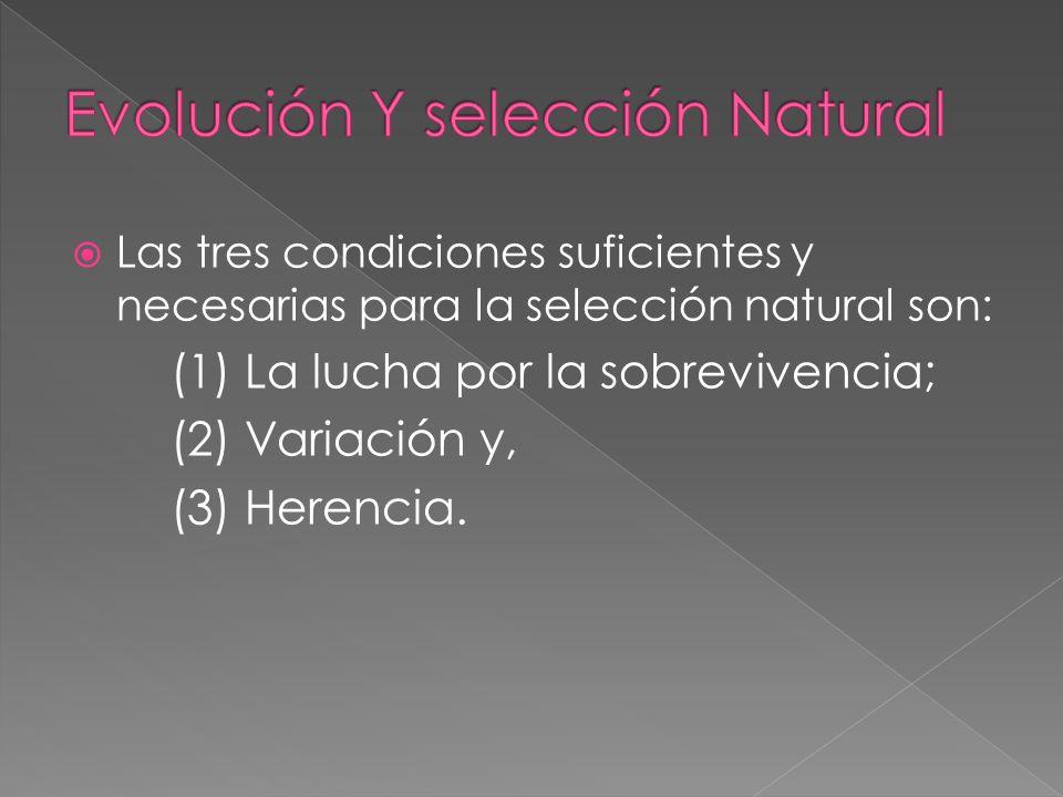 Las tres condiciones suficientes y necesarias para la selección natural son: (1) La lucha por la sobrevivencia; (2) Variación y, (3) Herencia.