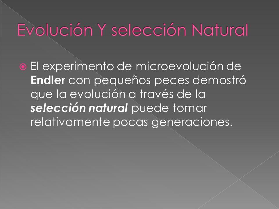 El experimento de microevolución de Endler con pequeños peces demostró que la evolución a través de la selección natural puede tomar relativamente poc