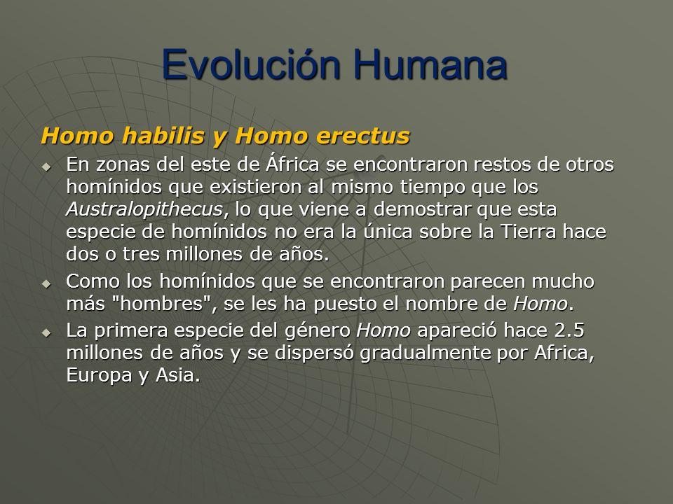 Homo habilis y Homo erectus En zonas del este de África se encontraron restos de otros homínidos que existieron al mismo tiempo que los Australopithec