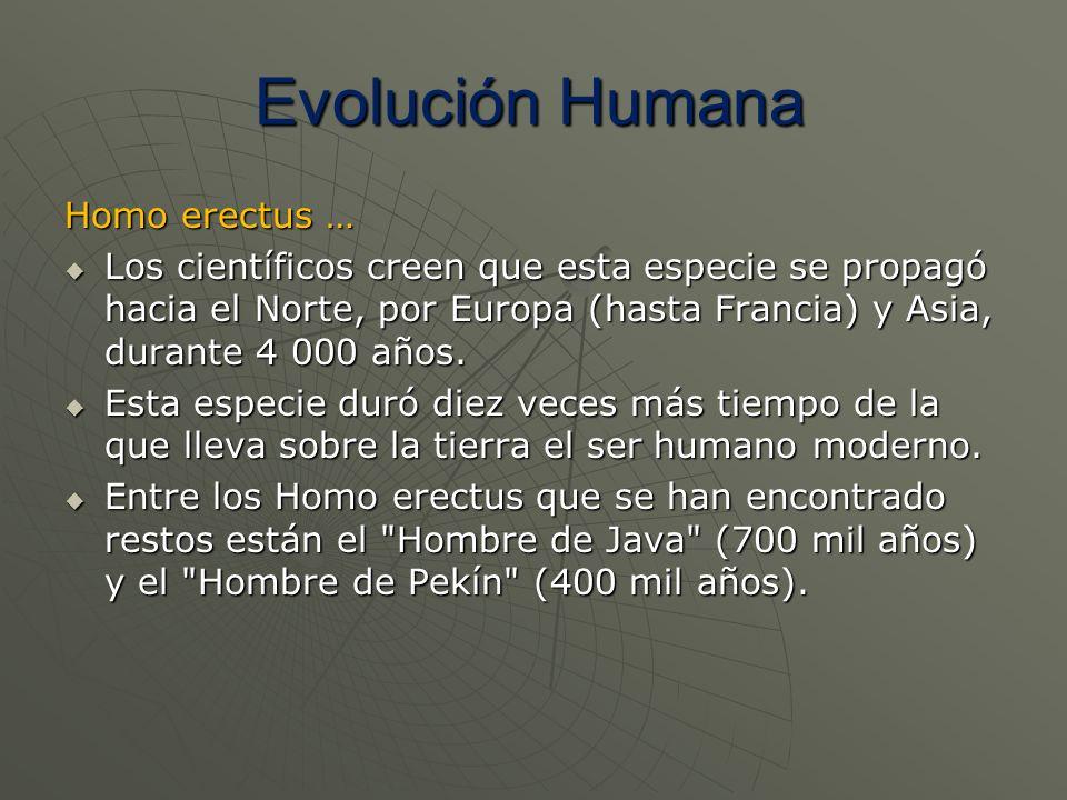 Homo erectus … Los científicos creen que esta especie se propagó hacia el Norte, por Europa (hasta Francia) y Asia, durante 4 000 años. Los científico
