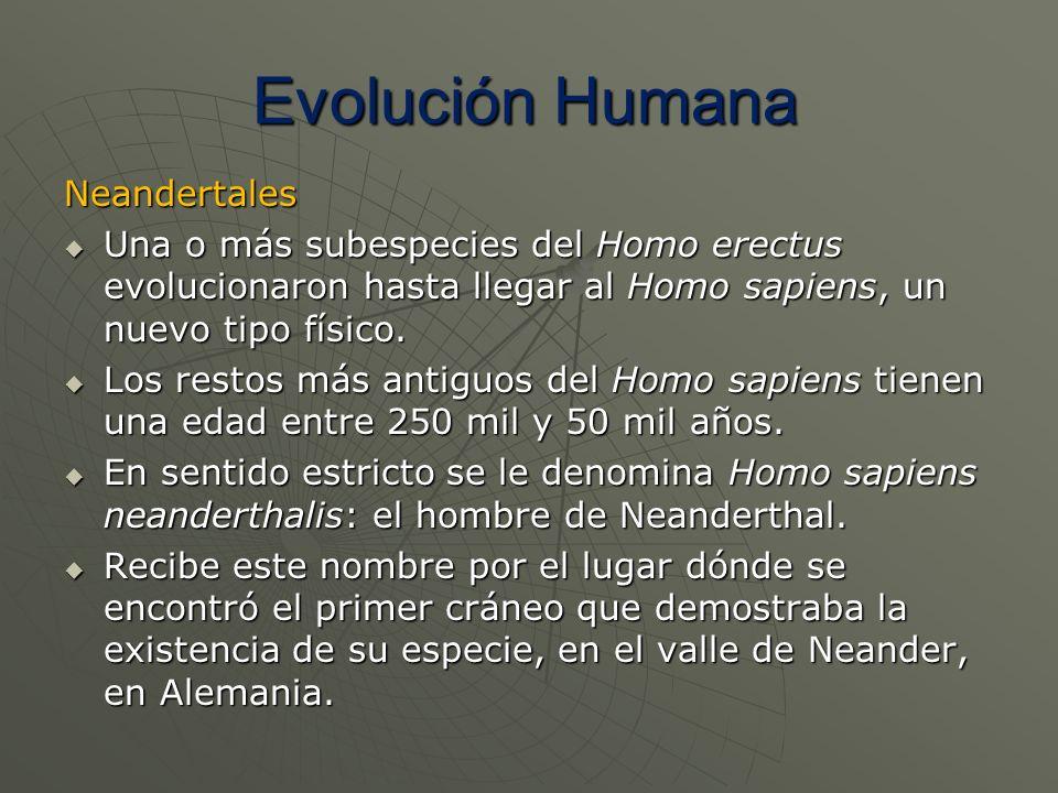 Neandertales Una o más subespecies del Homo erectus evolucionaron hasta llegar al Homo sapiens, un nuevo tipo físico. Una o más subespecies del Homo e
