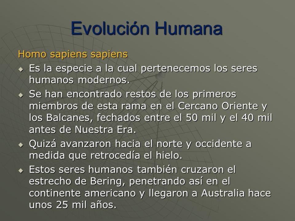 Homo sapiens sapiens Es la especie a la cual pertenecemos los seres humanos modernos. Es la especie a la cual pertenecemos los seres humanos modernos.