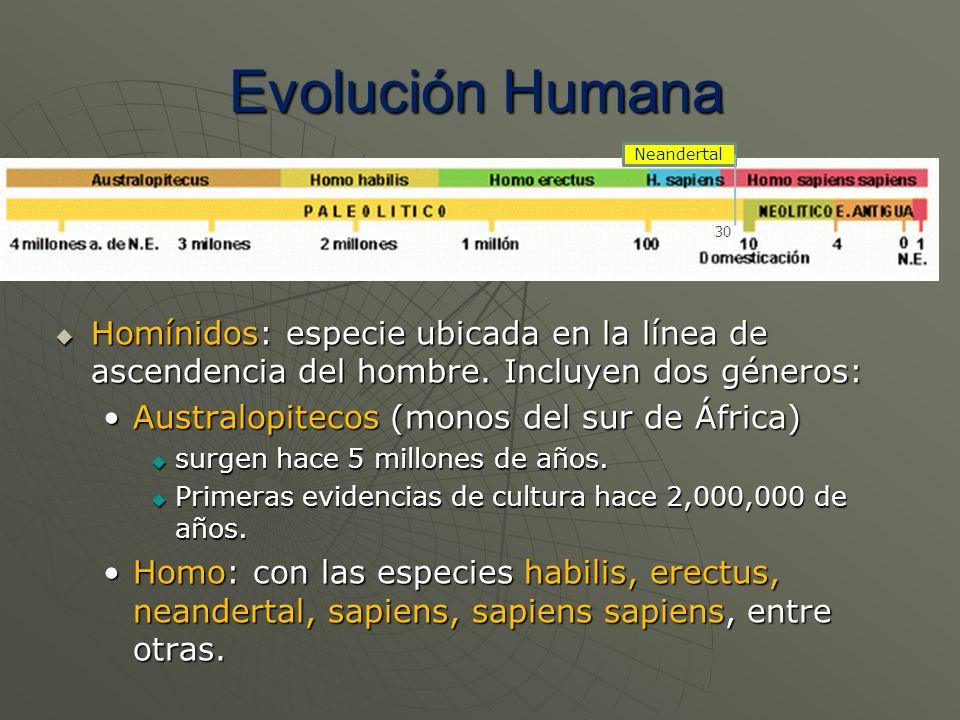 Homínidos: especie ubicada en la línea de ascendencia del hombre. Incluyen dos géneros: Homínidos: especie ubicada en la línea de ascendencia del homb